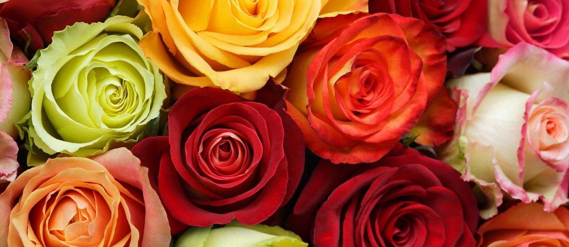 Купить розы питомника бломквист прикольный подарок мужчине на 55 лет