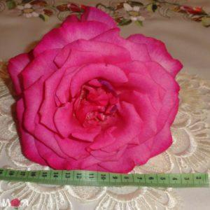 Пароле роза