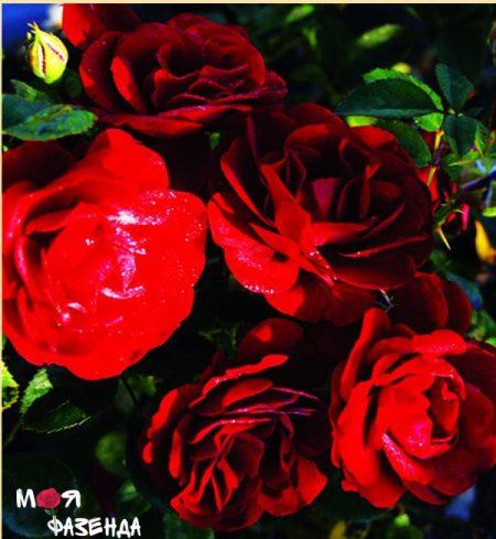 Гранд Палац роза