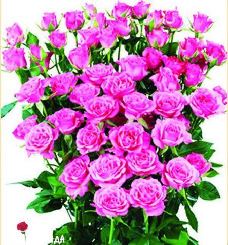 Спрей розовый роза