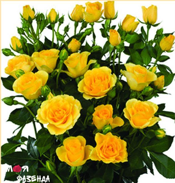Спрей желтый роза
